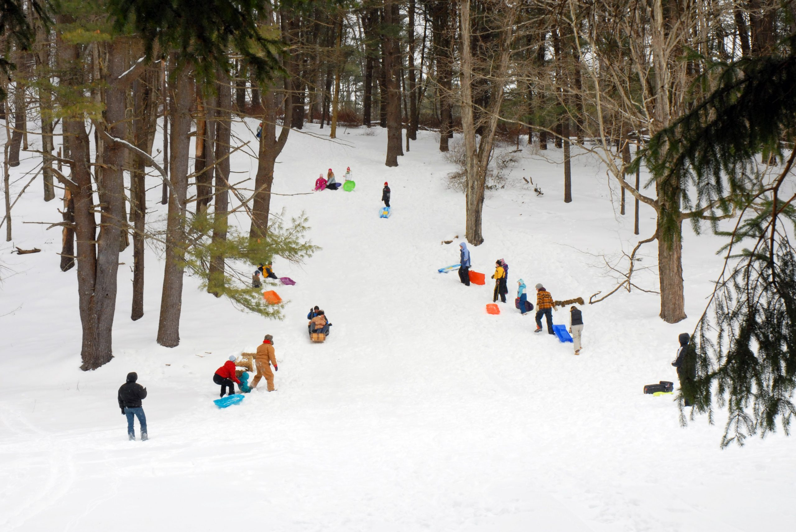 Sledding Area in Cook Forest