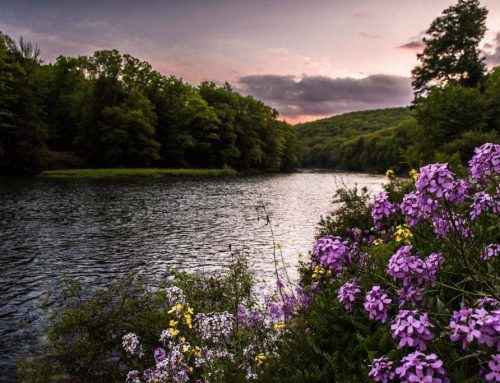 Blooming along the Clarion River